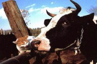 cat-and-cow.jpg